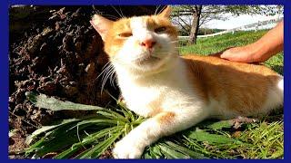 木陰で寝ていた野良猫をナデナデしたら喜んで手をペロペロしてきた