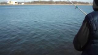 ловля салаки в балтийске 2015