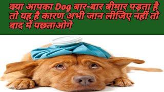 Dog के बार बार बीमार पड़ने के कारण !! Dog Sickness Reason