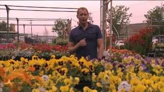 Gardening with Tim: Watering in Hot Weather