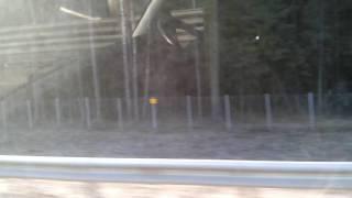 Забор вдоль трассы м3 перекрыл пути миграции диких животных