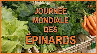 Journée mondiale des épinards