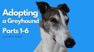 Adopting a Greyhound