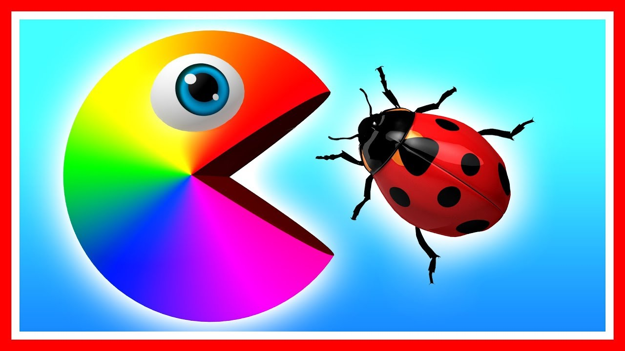 Learn Colors With Pacman As He Finds A Ladybug Beetle Caterpillar And Travels Down A Magic Slide Youtube