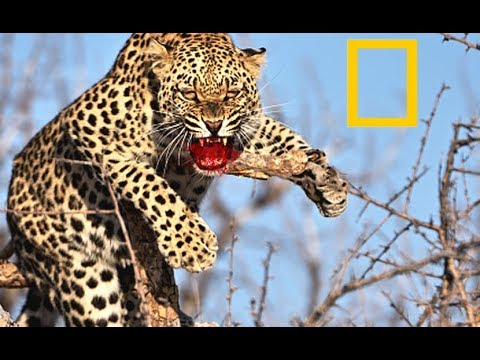 Unique Super Predators - African Wildlife (2018 Documentary)