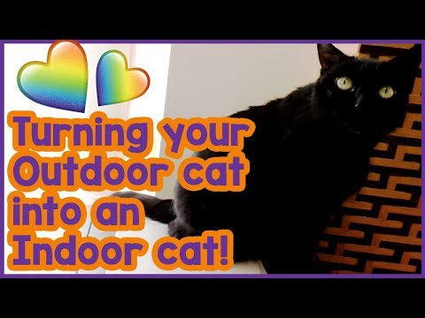 How To Make An Outdoor Cat An Indoor Cat! Turning Your Cat From And Outdoor Cat To An Indoor Cat!