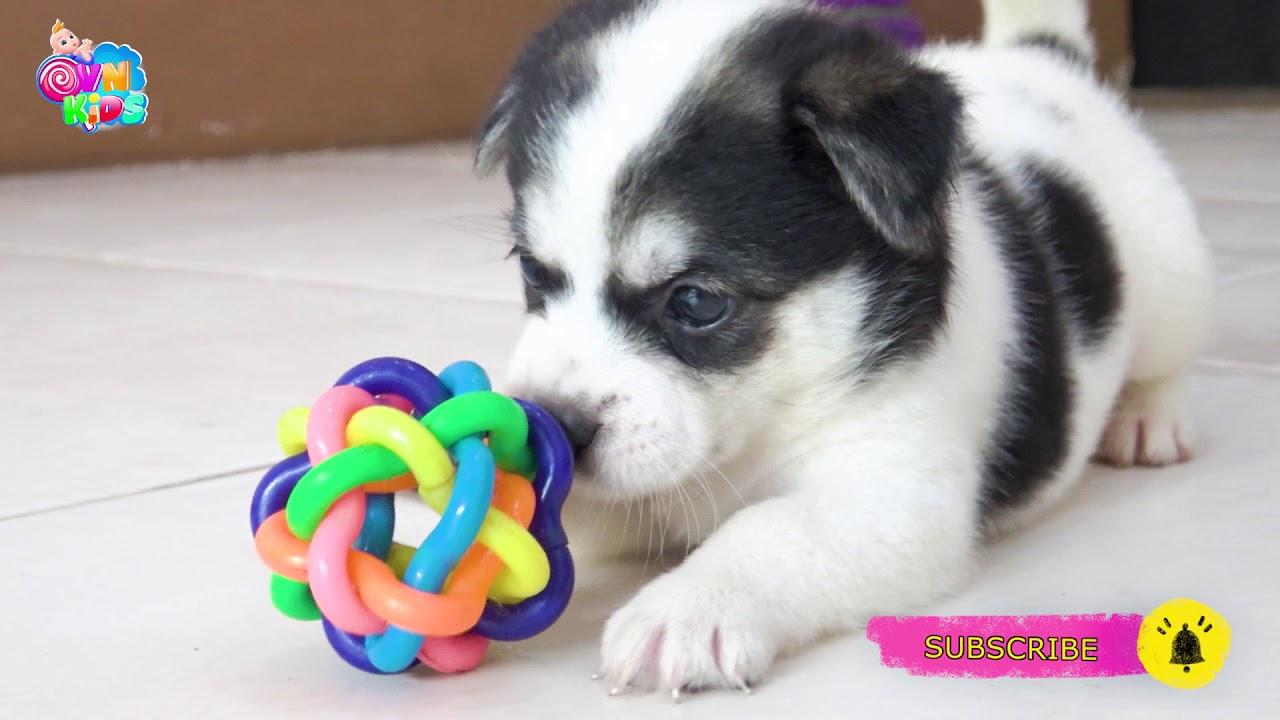 Cún con đáng yêu, cún con ơi - Nhạc thiếu nhi vui nhộn sôi động