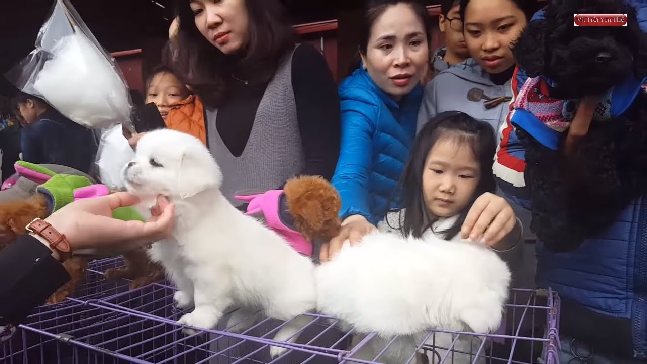 Khám phá chợ bán chó mèo cảnh lớn nhất Việt Nam