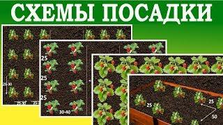 сидераты для клубники в междурядьях (осенью и весной): фото + видео