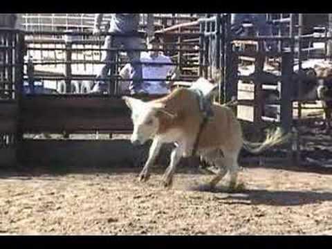 Lot #2381 - Coming 2yr Old Bucking Bull