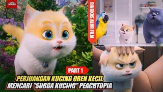 Part1| Kucing Oren Kecil Bar Bar Ingin Mencari \