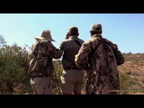 Waterbuck rifle hunting video South Africa
