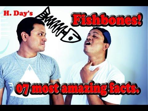 Fish Bone Facts | O. Facts #02