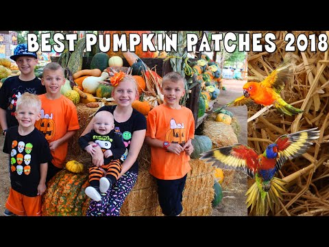 Michael Terrified by Birds, Lost in a Corn Maze & Best Pumpkin Patch EVER || Mommy Monday