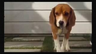 Como Cães e Gatos Filmes Online Grátis