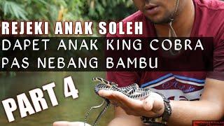 TEBANG BAMBU MALAH NEMU ANAK KING COBRA/EXPEDISI BATAS NEGARA INDONESIA/MALAYSIA
