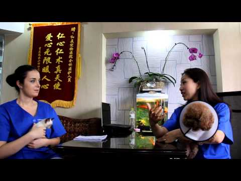 Traveling with your pet to China