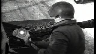 Engineers of United States 95th Division spread sand on highway by a Hooper in Sa...HD Stock Footage