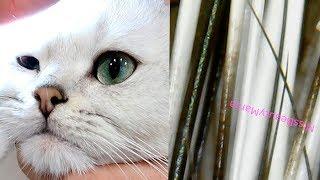 КОТ ПОД МИКРОСКОПОМ  КАК ВЫГЛЯДИТ КОТИК УВЕЛИЧЕННЫЙ В 1000 РАЗ 🐾 ЛАПЫ КОГТИ НОС ШЕРСТЬ cat Missbeau