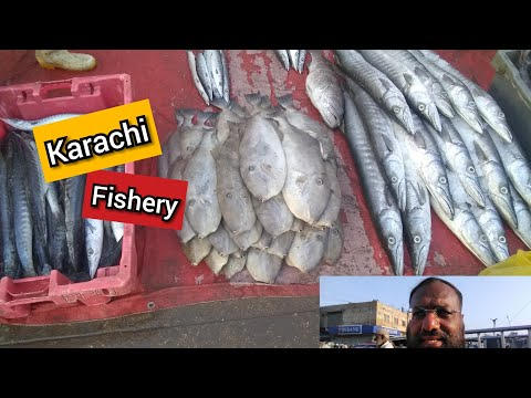 Latest Rates Of Fish | Karachi Fisheries | 26th October 2019
