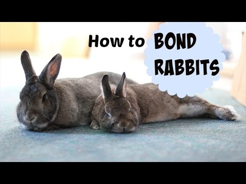 Bonding Multiple Rabbits | Step By Step
