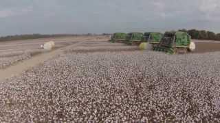 Omega Cotton 2013
