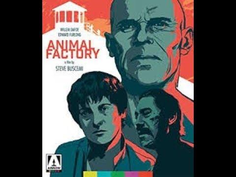 Animal Factory: Movie Review (Arrow Video)