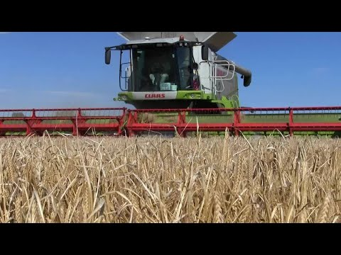 Harvest 2017: Spring barley jumps wheat in comining queue