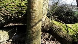 Niezwykłe drzewo. Unusual tree.