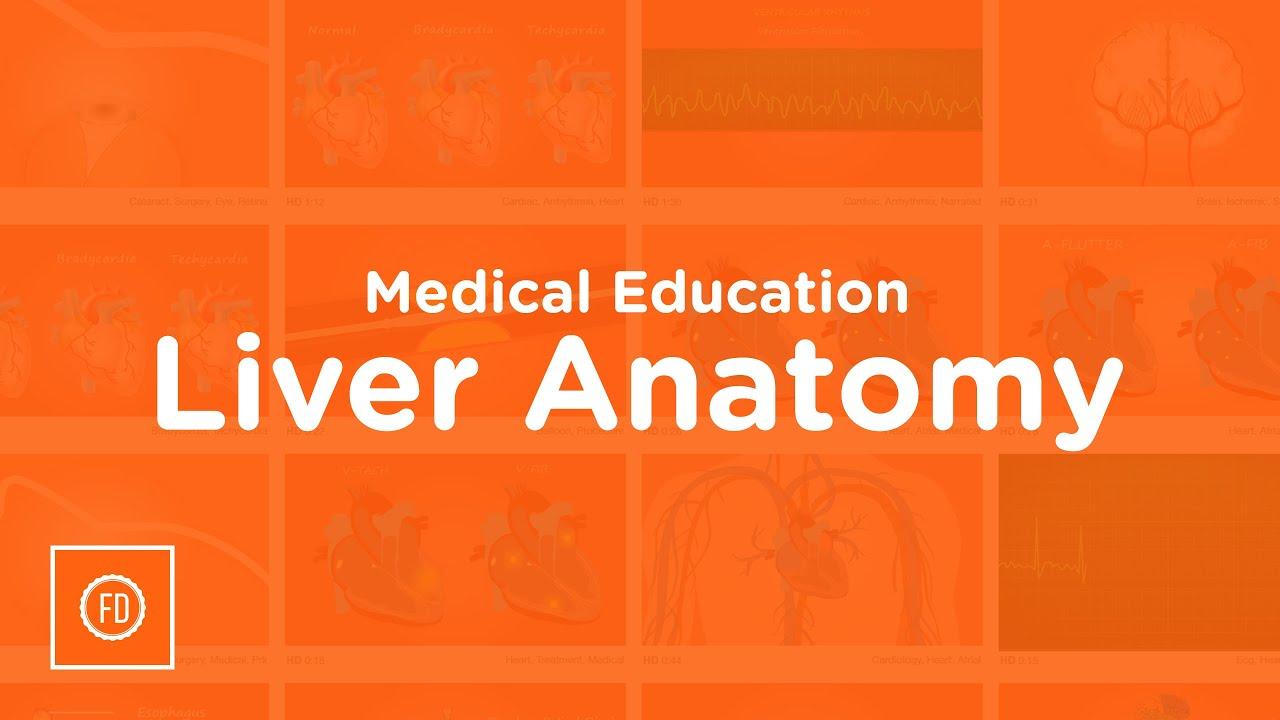 Liver Anatomy Medical Education HD Video F1 Digitals