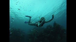 Gambar cover Freediving Utila's Caves with our Airbnb guests