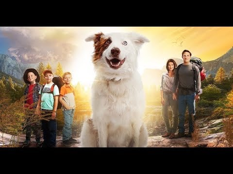 Download Бродяжка / The Stray (2017) Official Trailer