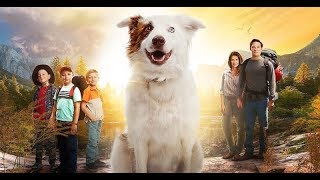 Бродяжка / The Stray (2017) Official Trailer
