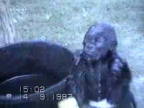 картинки с животными с видео: