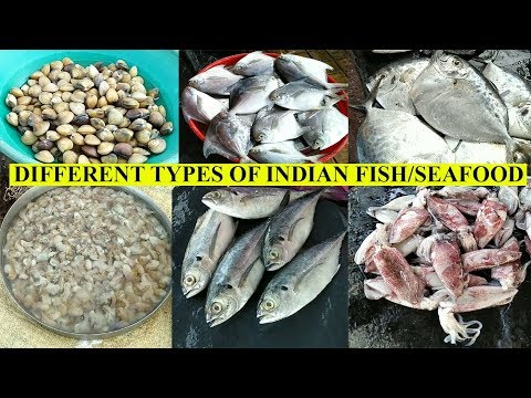 Fish | Know Different Types Of Indian Fish And Seafood | Karwar Fish Market | Fish Names In English