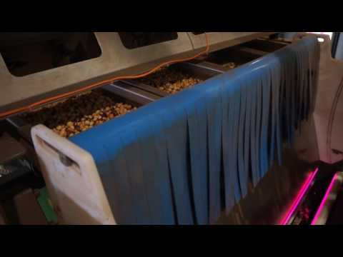 Roasted hazelnut sorting machine Helius - TOMRA Sorting