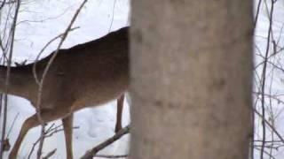 460 XVR Pistol Ohio Whitetail Hunt
