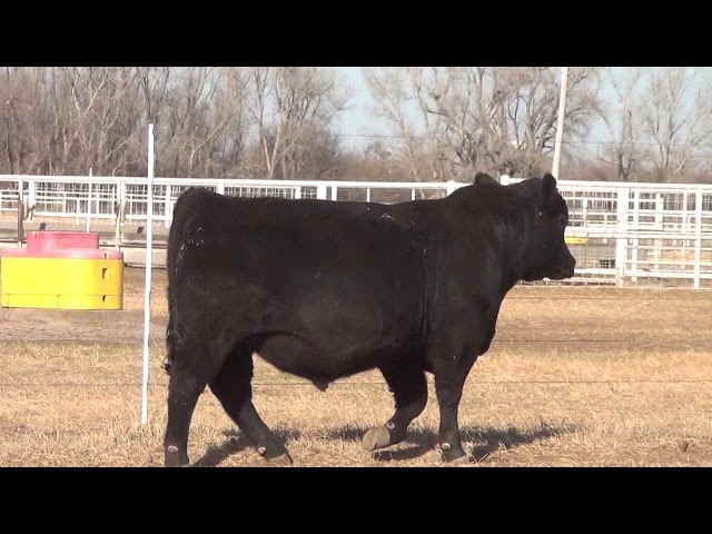 Express Ranches Lot 59