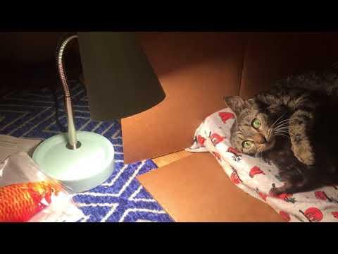 Amazon Wishes Granted, Max Meets Mama Kitty!