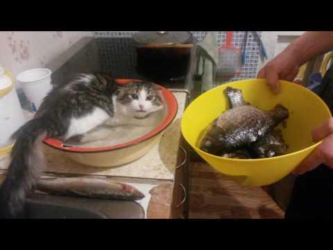 Кот решил принять ванну
