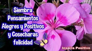 Siembra Pensamientos Alegres y Positivos y Cosecharas felicidad -  Motivación