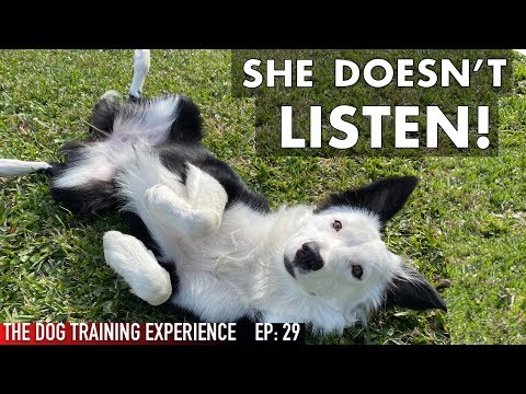 REAL TRAINING For Anyone With A Dog That Doesn't Listen!