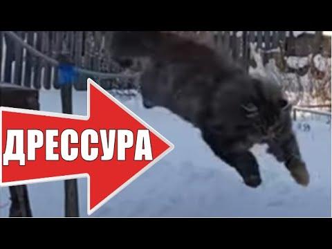 Дрессировка кошки умные животные / Training cats are smart animals