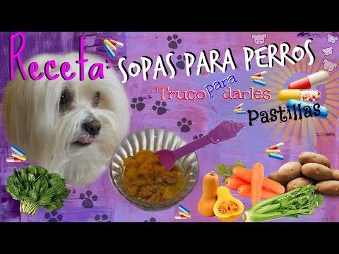 Sopa para perros y como darles pastillas, 5 recetas, Coton de tulear I Lorentix