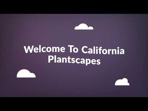 California Plantscapes - Vertical Plant Garden Orange County, CA