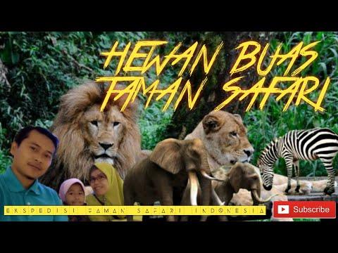 taman-safari-indonesia---wisata-bogor-jawa-barat-januari-2020