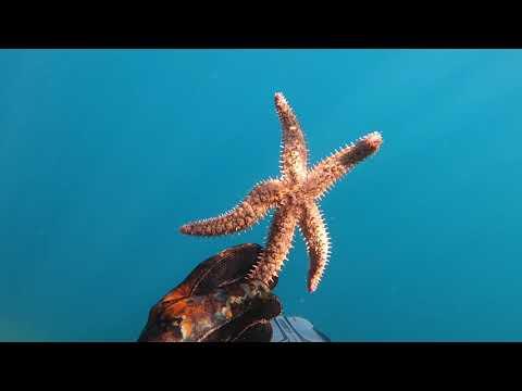 Snorkeling a Erchie, in Costiera Amalfitana | GoPro Hero8