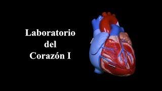 Laboratorio del Corazón I Dr. Jorge Orellana USAC thumbnail