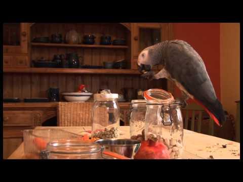 Do parrots make good pets?