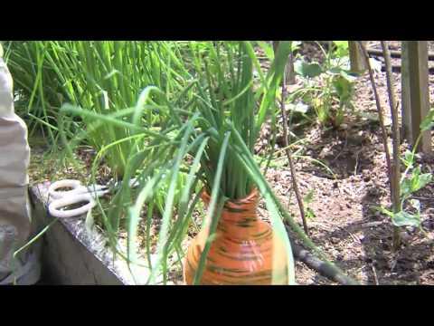 Garden Tips Edmonton